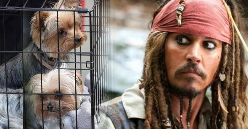 johnny-depp-facing-10-years-for-transporting-dogs.