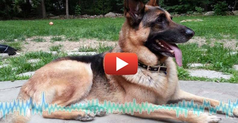 wyckoff-cop-shoots-dog-wrong-house-audio