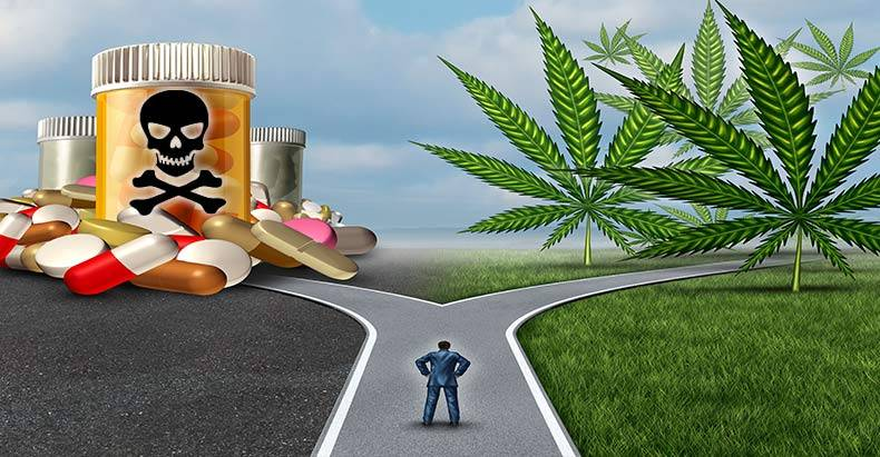 Study-Shows-Deaths-from-Dangerous-Painkillers-Plummet-in-States-with-Legal-Weed