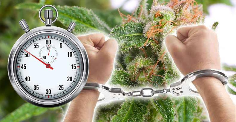 every-51-seconds-there-is-a-marijuana-arrest