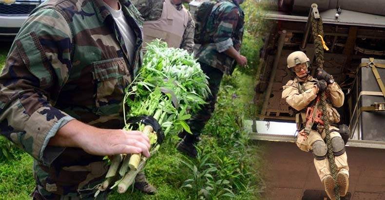 national-guard-raids-pot-growers
