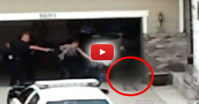 Largest-Settlement-for-Dog-Killing-in-US-History-Paid-After-Cops-Murder-Restrained-Dog-on-Video