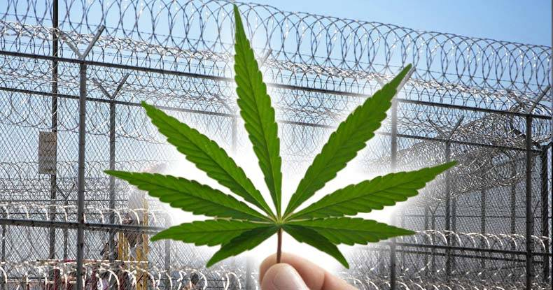 Image result for marijuana prison