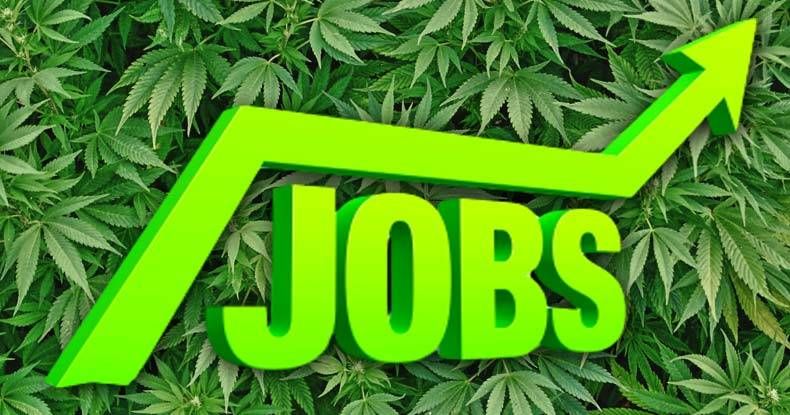 pot-jobs-skyrocket-colorado