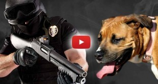 cops-shoot-family-dogs