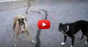body-cam-cop-attacked-by-dogs