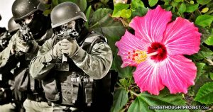 Innocent Family Raided by SWAT, Held at Gunpoint After Cops Mistook Hibiscus for Weed
