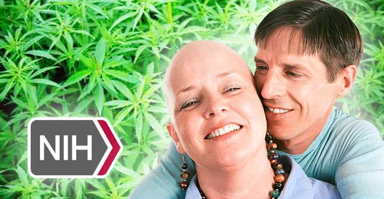 marijuana-kills-cancer-cells-government-admits