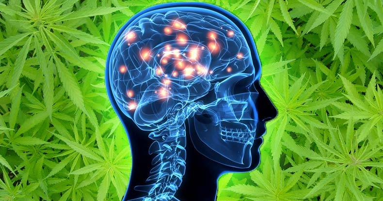 marijuana-alzheimer-treatment