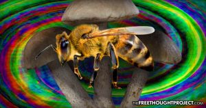Study Finds Magic Mushrooms Help Honey Bees Fight Off Dangerous Viruses That Are Killing Them Off